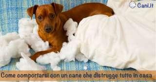 Come comportarsi con un cane che distrugge tutto in casa