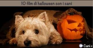10 film di halloween con i cani