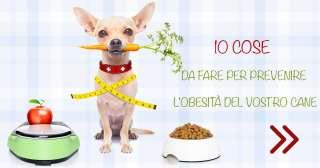 10 cose da fare per prevenire l'obesitàdel vostro cane