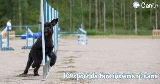 10 Sport insieme al cane