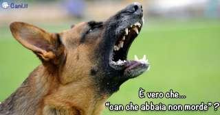 È vero che «can che abbaia non morde»?