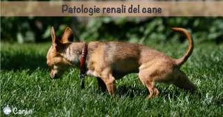 Patologie renali del cane