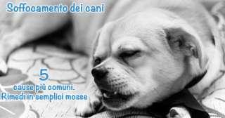 Soffocamento dei cani