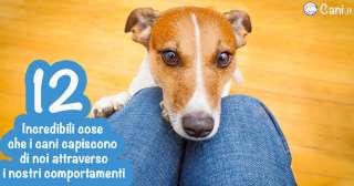 12 incredibili cose che i cani capiscono di noi attraverso i nostri comportamenti