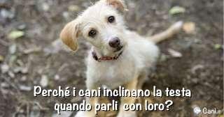 Perché i cani inclinano la testa quando parli con loro?