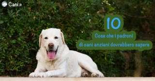 10 cose che i padroni di cani anziani dovrebbero sapere