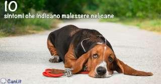 10 sintomi che indicano malessere nel cane