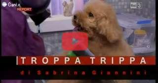 Troppa Trippa Report - Un pò di chiarezza
