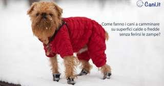 Camminare su superfici calde o fredde senza ferirsi le zampe