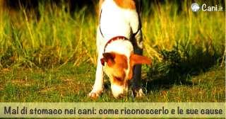 Mal di stomaco nei cani: sintomi, cause e cure