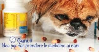 Idee per far prendere le medicine ai cani