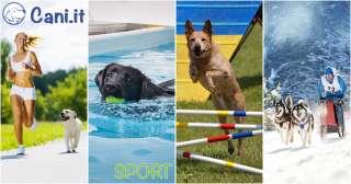 Sport da fare col cane