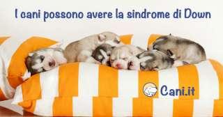 I cani possono avere la sindrome di Down