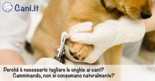 Perché è necessario tagliare le unghie ai cani?