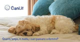 Quanto tempo, in media, i cani passano a dormire?