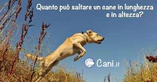 Quanto può saltare un cane in lunghezza e in altezza?