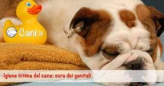 Igiene intima del cane: cura dei genitali