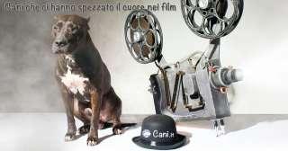 Cani che ci hanno spezzato il cuore nei film
