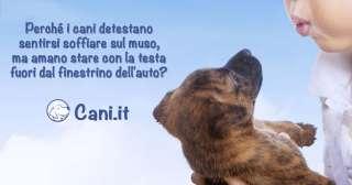 Perché i cani detestano sentirsi soffiare sul muso?