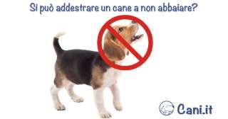 Si può addestrare un cane a non abbaiare?