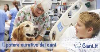 Il potere curativo dei cani
