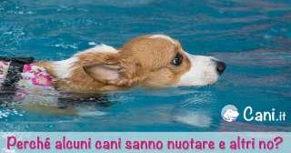 Perché alcuni cani sanno nuotare e altri no?