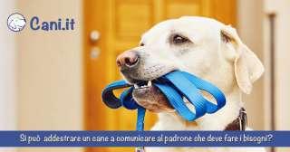 Si può addestrare un cane a comunicare al padrone che deve fare i bisogni?