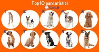 Top 10 cani atletici