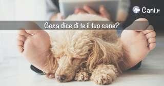 Cosa dice di te il tuo cane?