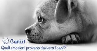 Quali emozioni provano davvero i cani?