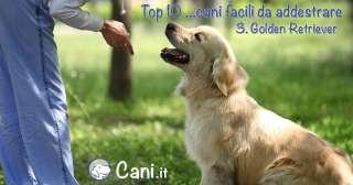 Top 10 cani facili da addestrare