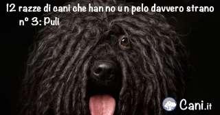 12 razze di cani che hanno un pelo davvero strano