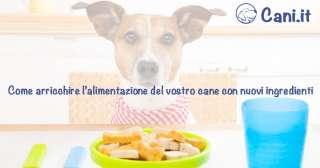 Come arricchire l'alimentazione del vostro cane con nuovi ingredienti