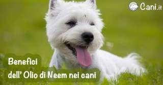I benefici dell' Olio di Neem nei cani