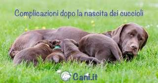 Gravidanza canina: complicazioni dopo la nascita dei cuccioli