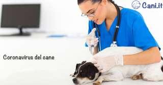 Coronavirus del cane