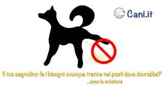 Il tuo cagnolino fa i bisogni ovunque tranne nei posti dove dovrebbe? Ecco la soluzione