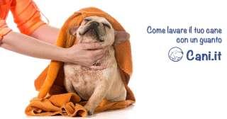 Come lavare il tuo cane con un guanto