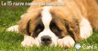 Le 15 razze canine più silenziose