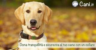Dona tranquillità e sicurezza al tuo cane con un collare