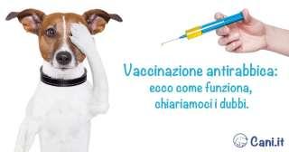 Vaccinazione antirabbica nel cane: ecco come funziona, chiariamoci i dubbi