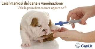 Leishmaniosi del cane e vaccinazione