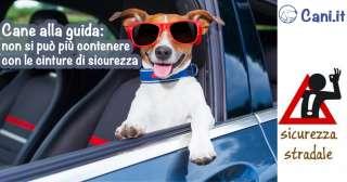 Cane alla guida: non si può più contenere con le cinture di sicurezza