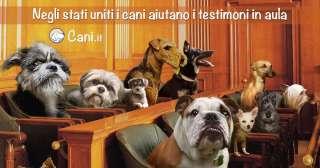 Negli stati uniti i cani aiutano i testimoni in aula