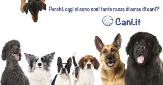 Perché oggi ci sono così tante razze diverse di cani?