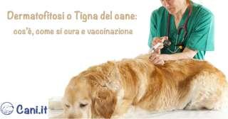 Dermatofitosi o Tigna del cane: cos'è, come si cura e vaccinazione