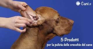 5 prodotti per la pulizia delle orecchie del cane