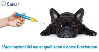 Vaccinazioni del cane: quali sono e come funzionano