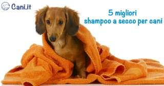 I 5 migliori shampoo a secco per cani