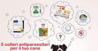 5 collari antiparassitari per il tuo cane